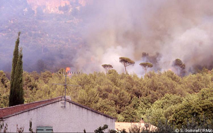 Feu de forêt à Evenos (Var) 2004 - Source IRMA Grenoble / Sébastien Gominet